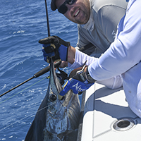 Sailfish caught and released on Charter