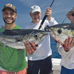 blackfin tunas
